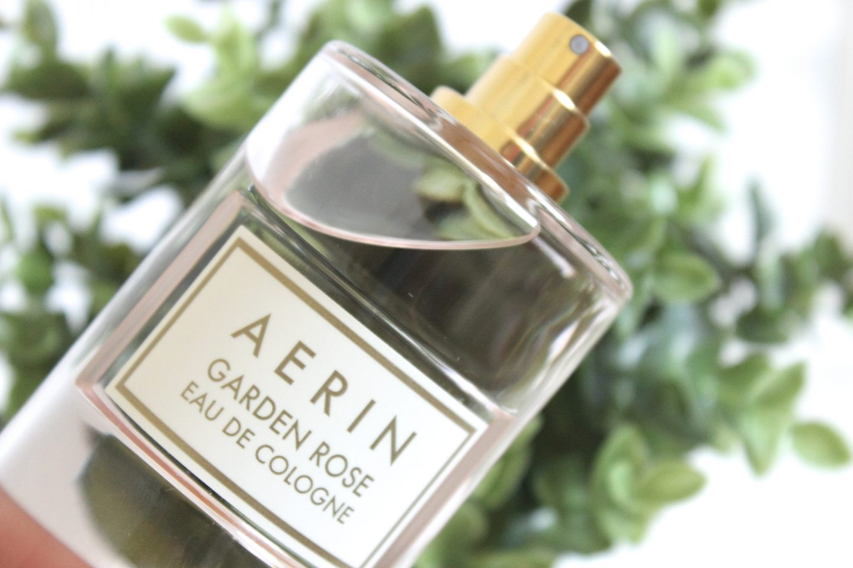 Aerin Garden Rose